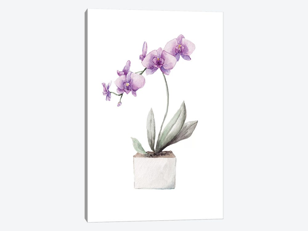 Orchids by Wandering Laur 1-piece Canvas Art Print