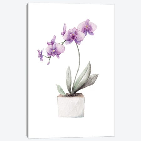 Orchids Canvas Print #RGF139} by Wandering Laur Art Print