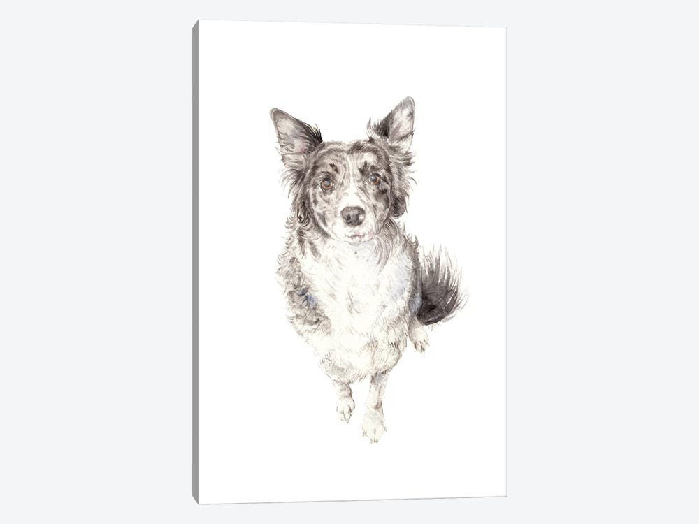 Border Collie by Wandering Laur 1-piece Art Print