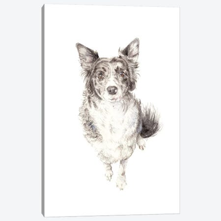 Border Collie Canvas Print #RGF13} by Wandering Laur Canvas Art Print
