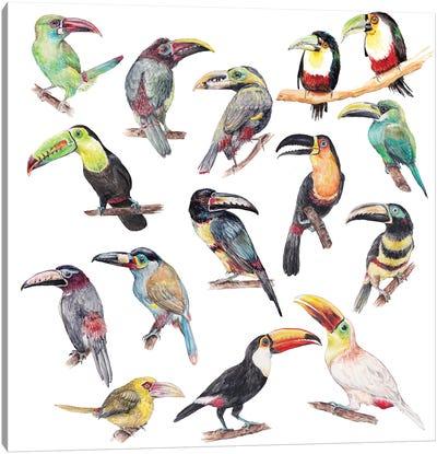 Watercolor Jungle Toucan Birds Canvas Art Print