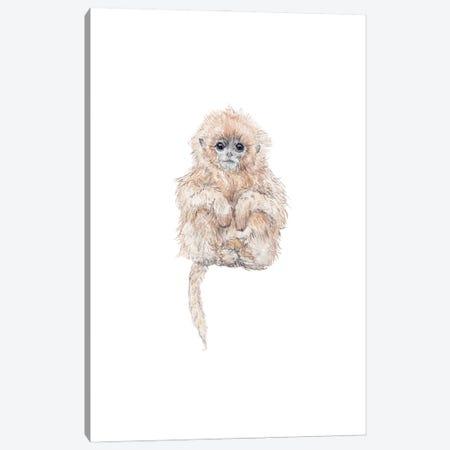 Sweet Baby Watercolor Tamarin Monkey Canvas Print #RGF142} by Wandering Laur Canvas Art