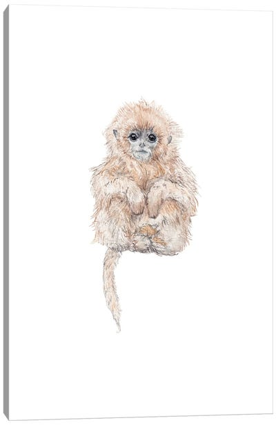 Sweet Baby Watercolor Tamarin Monkey Canvas Art Print