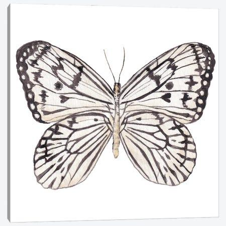 Zebra Butterfly Watercolor Canvas Print #RGF145} by Wandering Laur Art Print