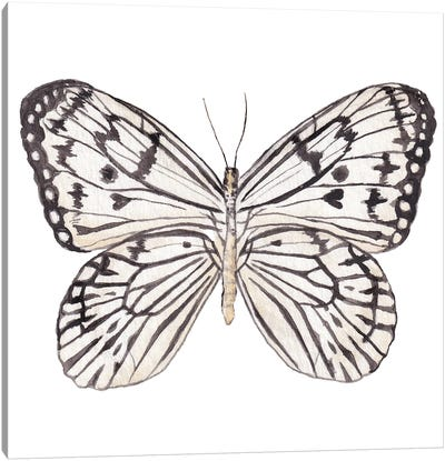 Zebra Butterfly Watercolor Canvas Art Print