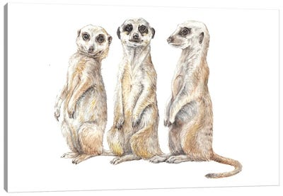 Funny Watercolor Meerkats Canvas Art Print