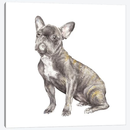Brindled French Bulldog Canvas Print #RGF14} by Wandering Laur Canvas Artwork