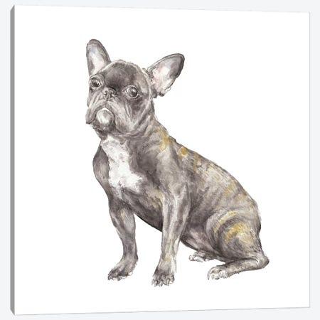 Brindled French Bulldog Canvas Print #RGF14} by Wandering Laur Canvas Artwork