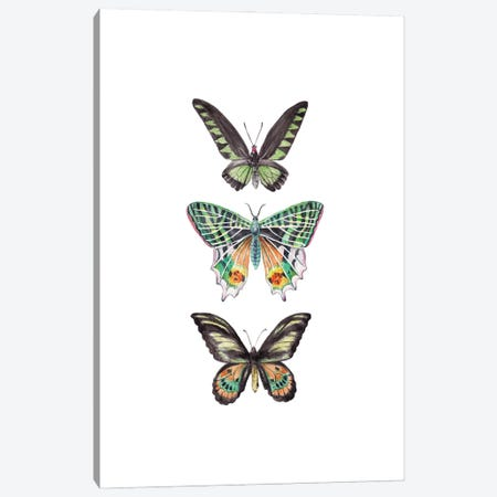 Watercolor Butterflies Canvas Print #RGF156} by Wandering Laur Canvas Art