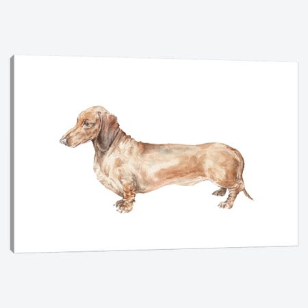Brown Dachshund Hot Dog Canvas Print #RGF15} by Wandering Laur Canvas Artwork