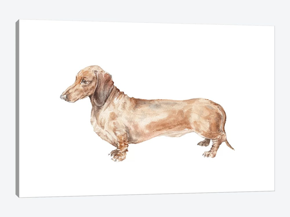 Brown Dachshund Hot Dog by Wandering Laur 1-piece Canvas Art Print