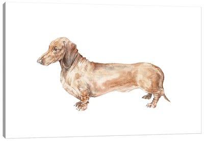 Brown Dachshund Hot Dog Canvas Art Print