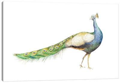 Watercolor Peacock Canvas Art Print