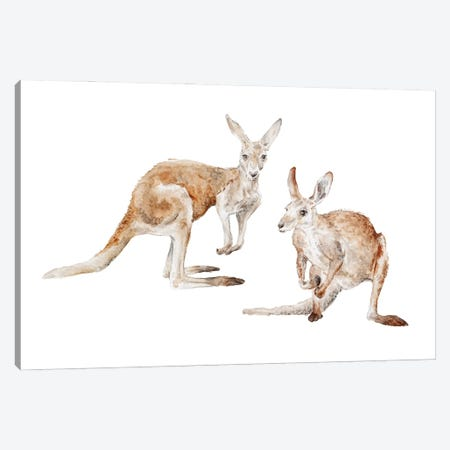Watercolor Kangaroos Canvas Print #RGF162} by Wandering Laur Canvas Artwork