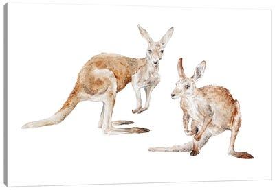 Watercolor Kangaroos Canvas Art Print