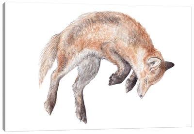 Watercolor Jumping Fox Canvas Art Print