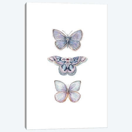 Watercolor Xerxes Butterflies Canvas Print #RGF169} by Wandering Laur Canvas Art