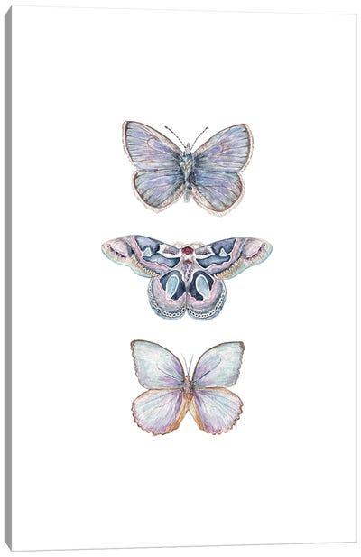 Watercolor Xerxes Butterflies Canvas Art Print