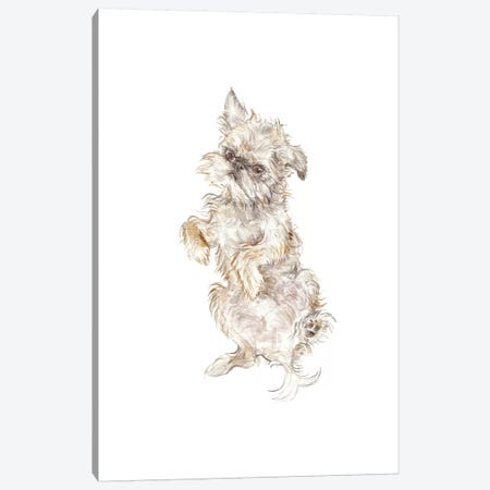 Brussels Griffon Canvas Print #RGF16} by Wandering Laur Canvas Wall Art