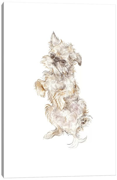 Brussels Griffon Canvas Art Print