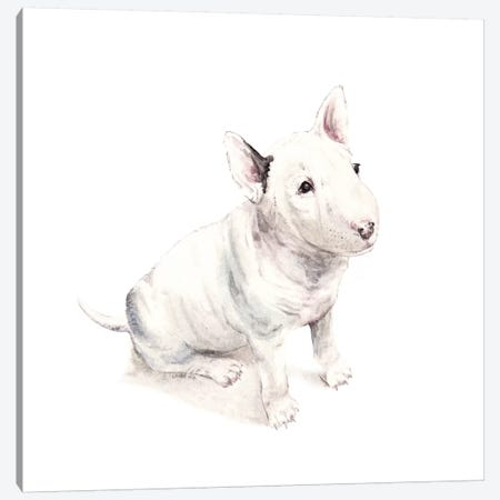 Bull Terrier Canvas Print #RGF17} by Wandering Laur Canvas Art