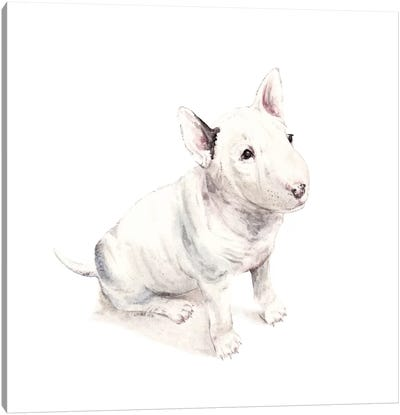 Bull Terrier Canvas Art Print