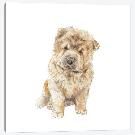 Chow Chow Canvas Print #RGF22} by Wandering Laur Canvas Art