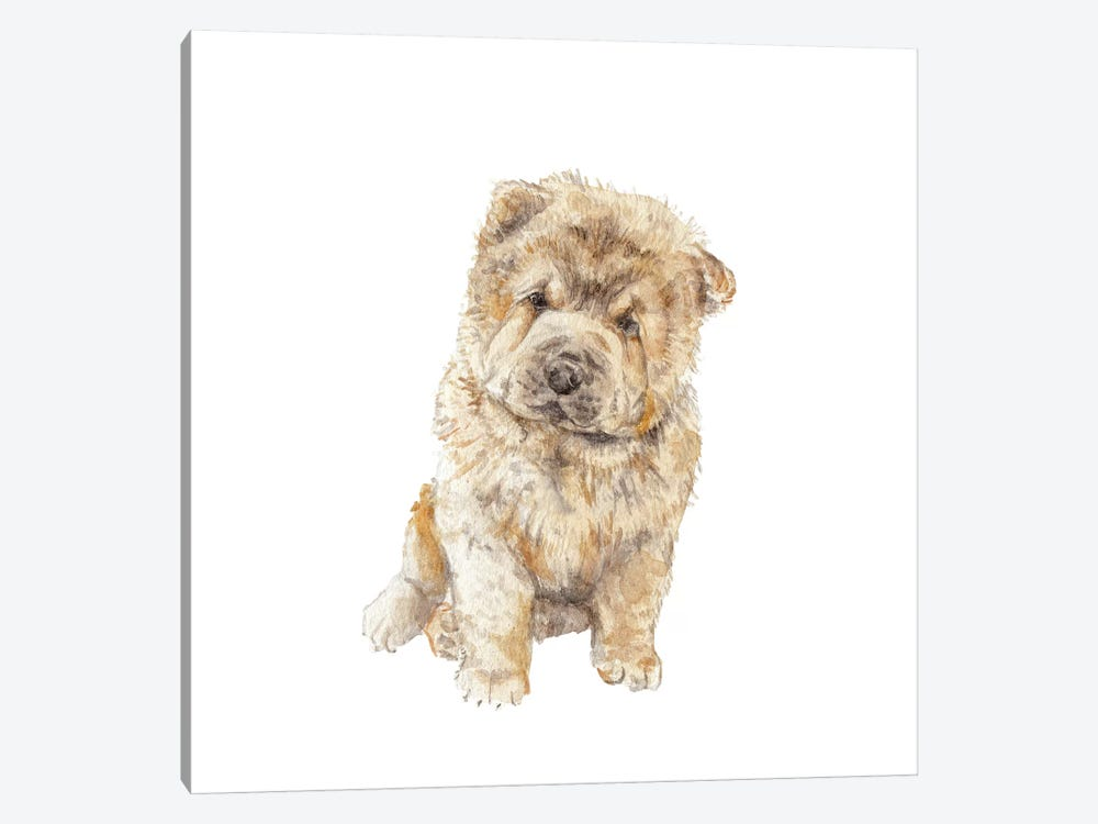 Chow Chow by Wandering Laur 1-piece Canvas Art Print
