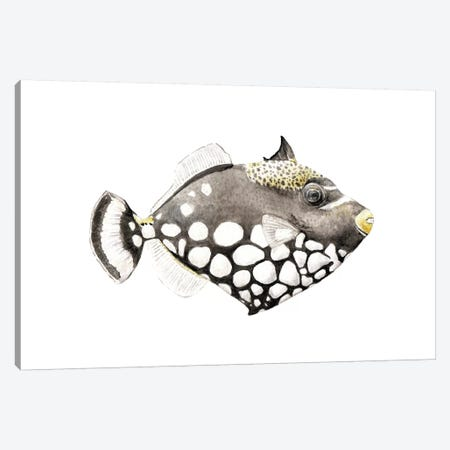 Tropical Clown Triggerfish Canvas Print #RGF23} by Wandering Laur Canvas Wall Art