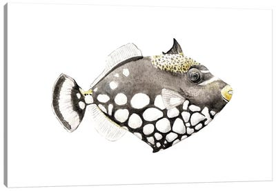 Tropical Clown Triggerfish Canvas Art Print