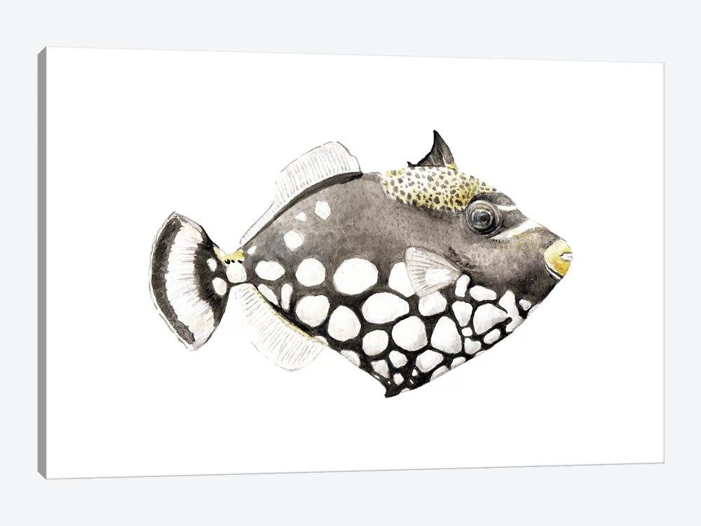 Tropical Clown Triggerfish by Wandering Laur 1-piece Canvas Artwork