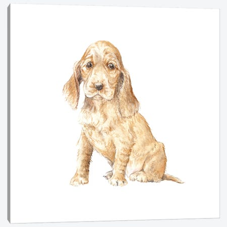 Cocker Spaniel Puppy Canvas Print #RGF24} by Wandering Laur Art Print