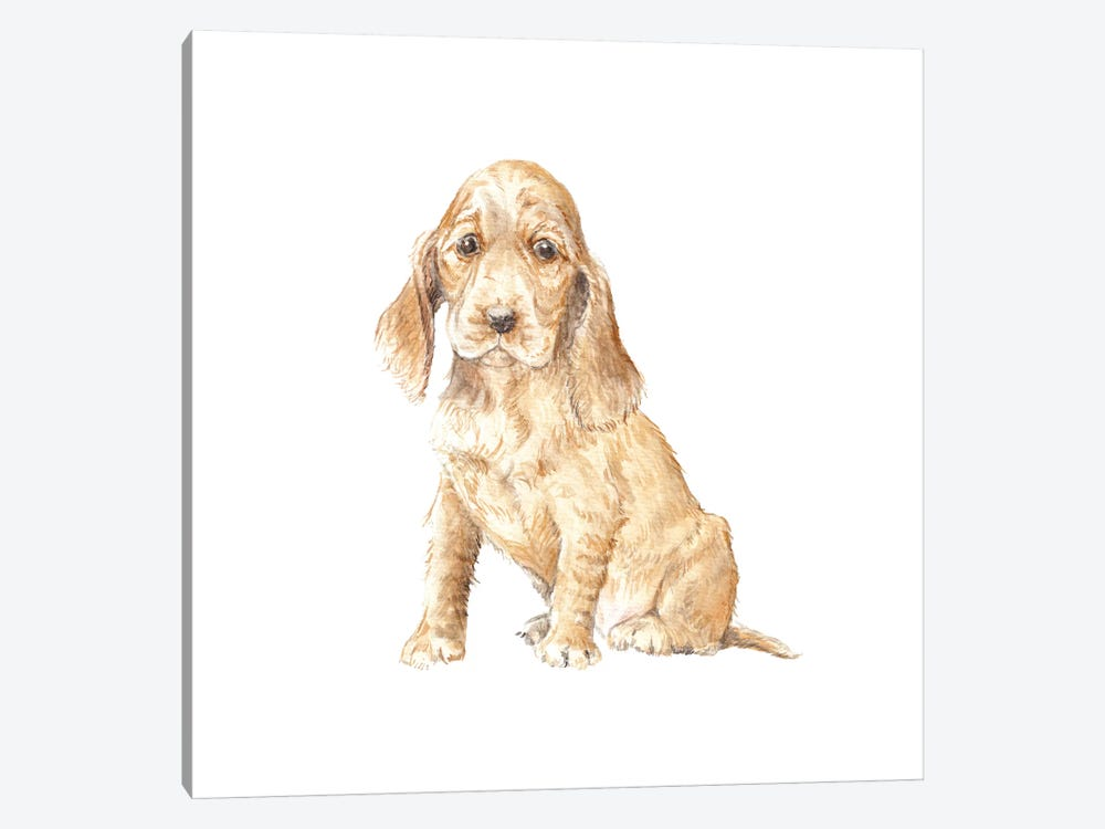 Cocker Spaniel Puppy by Wandering Laur 1-piece Canvas Print