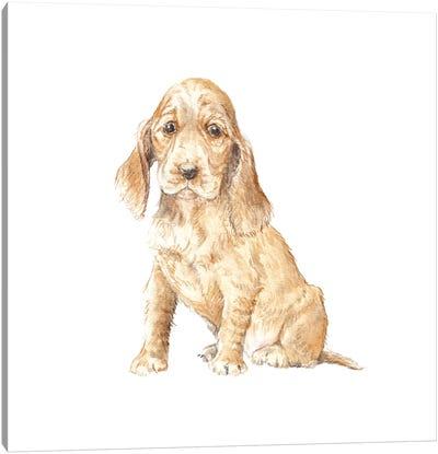 Cocker Spaniel Puppy Canvas Art Print