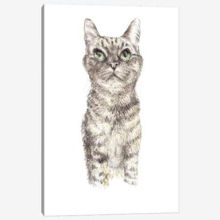 Concentrating Tabby Canvas Print #RGF26} by Wandering Laur Canvas Print