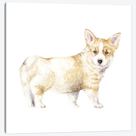 Corgi Puppy Canvas Print #RGF27} by Wandering Laur Canvas Print