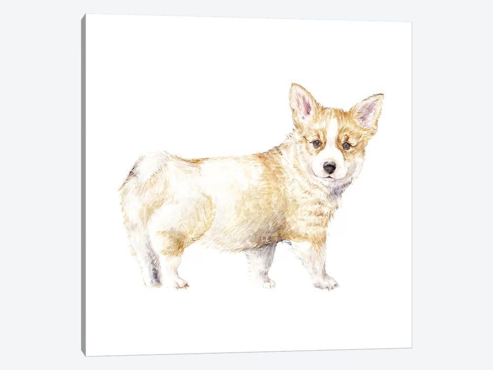 Corgi Puppy by Wandering Laur 1-piece Canvas Artwork
