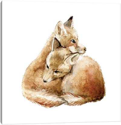 Cuddling Foxes Canvas Art Print