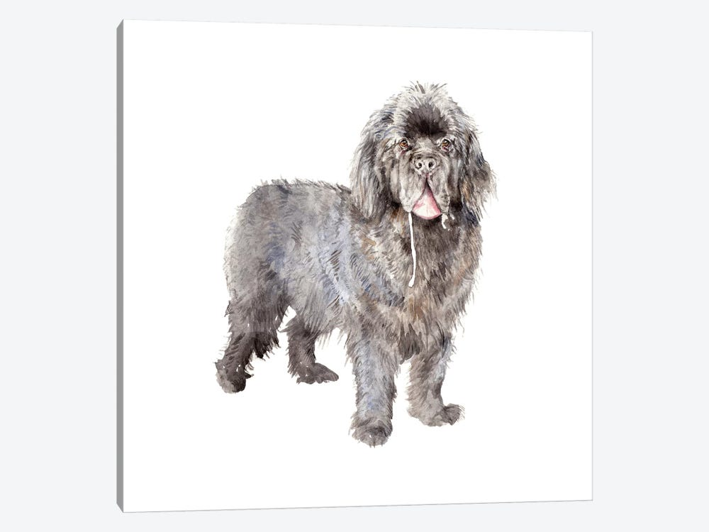 Drooly Newfoundland by Wandering Laur 1-piece Canvas Wall Art