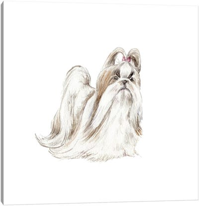 Fancy Shih Tzu Canvas Art Print