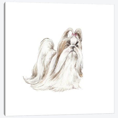 Fancy Shih Tzu Canvas Print #RGF31} by Wandering Laur Art Print