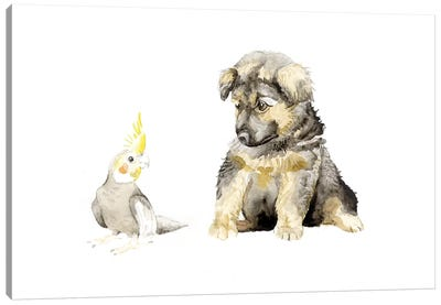 German Shepherd Puppy And Cockatiel Canvas Art Print