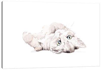 Grey Staring Cat Canvas Art Print