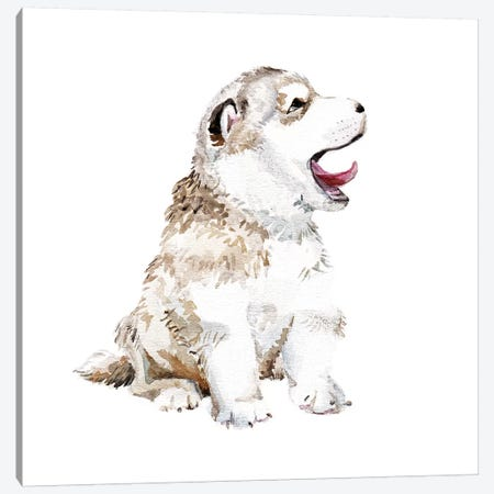 Happy Husky Puppy Canvas Print #RGF41} by Wandering Laur Canvas Wall Art