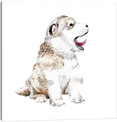 Happy Husky Puppy Canvas Art Print
