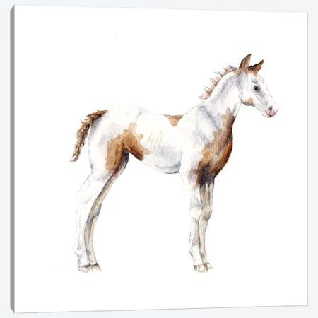 Horse Foal Canvas Print #RGF45} by Wandering Laur Art Print