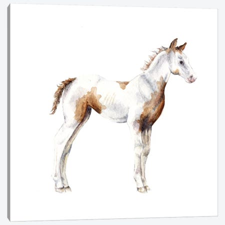 Horse Foal 3-Piece Canvas #RGF45} by Wandering Laur Art Print