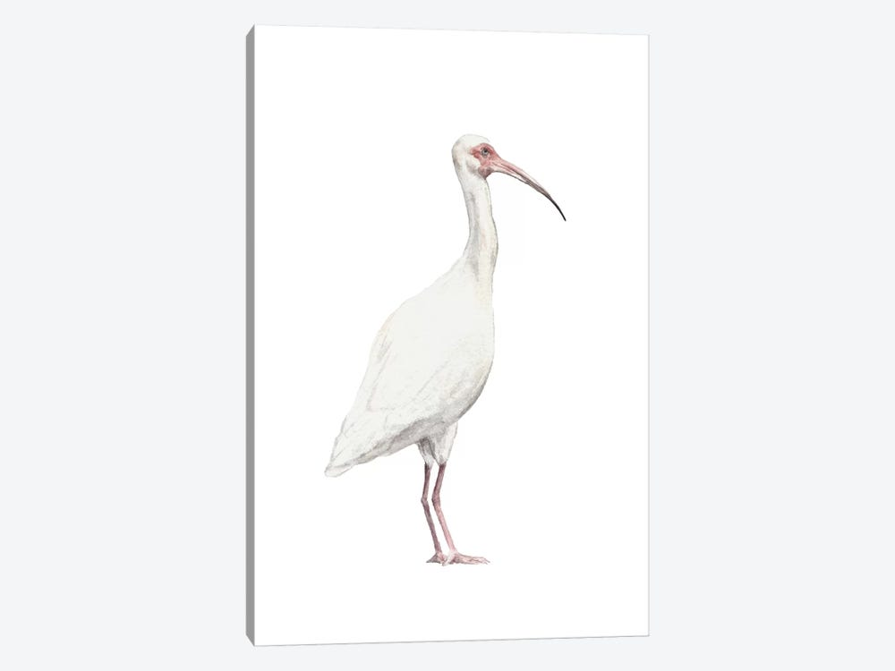 Ibis by Wandering Laur 1-piece Canvas Print