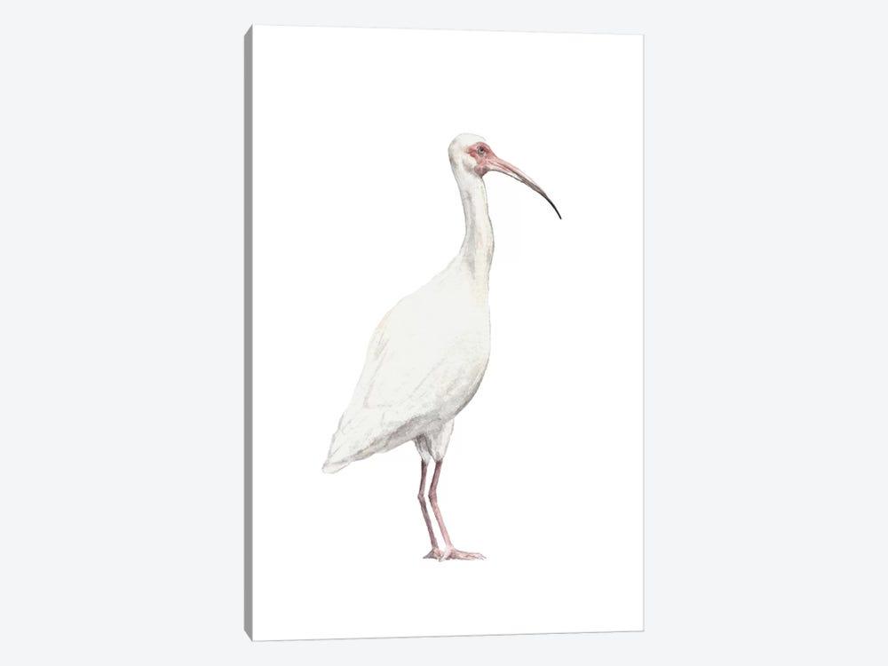 Ibis by Wandering Laur 1-piece Canvas Print