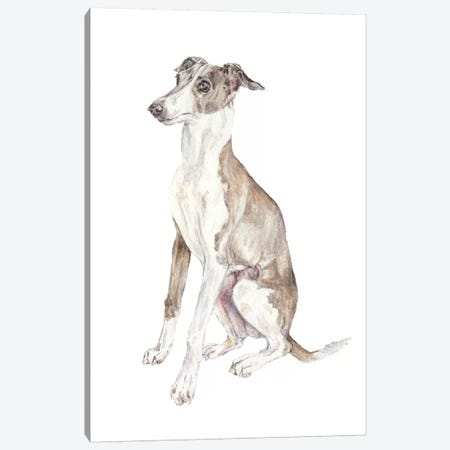 Italian Greyhound Canvas Print #RGF47} by Wandering Laur Canvas Art Print